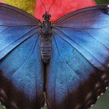 Kelebek Kanatları
